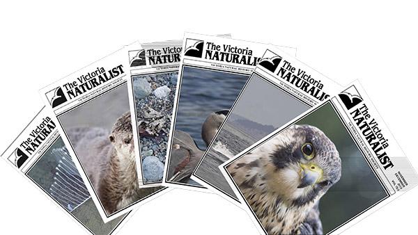 naturalistmagazines