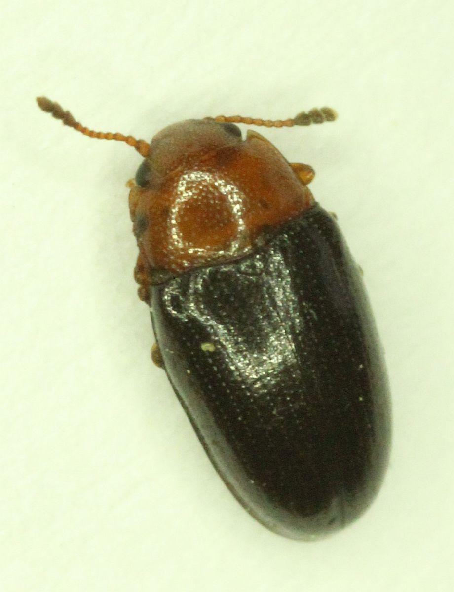 October 1 – Victoria Natural History Society